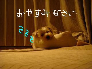 おやすみなさい・・・.JPG