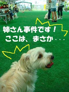 たいへんだぁ~~!.JPG