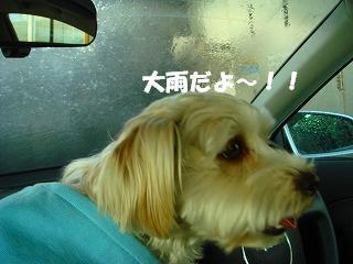 大雨だよ~.JPG