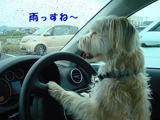 雨っすね~.JPG