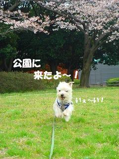 公園に来たよ!.JPG
