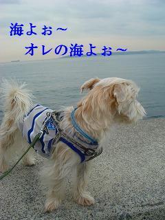 海よぉ オレの海ヨォ~.JPG